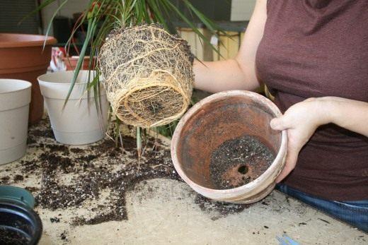 лучшее время для пересадки комнатных растений в марте