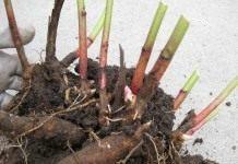 Август – самое подходящее время для пересадки растений