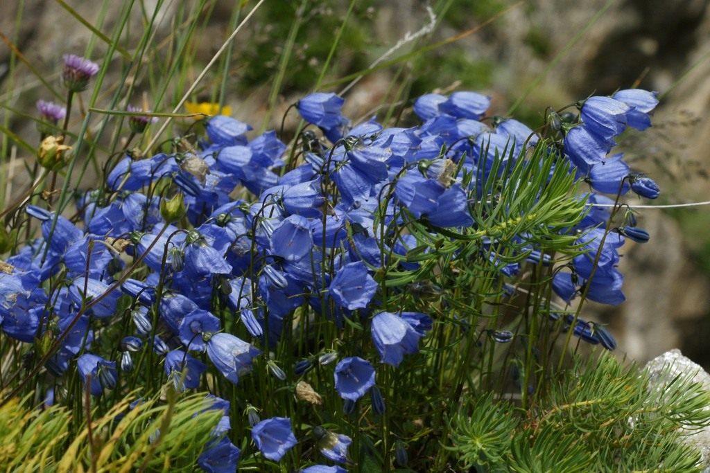 Самые редкие цветы в мире Интересные факты 88