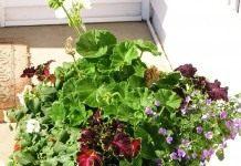 Посуда для растений
