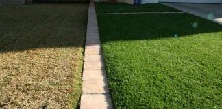 Газон (Lawn)