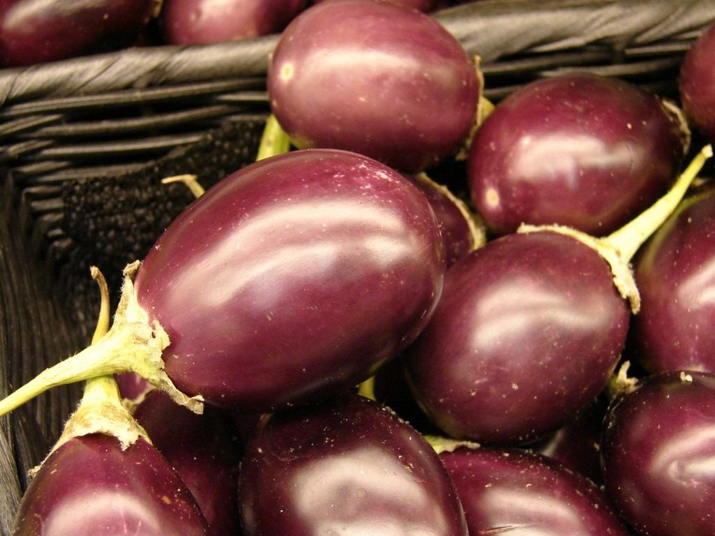 Баклажан (Solanum melongena)