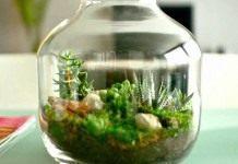 Сад в сосуде, или Флорариум своими руками