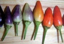 Капсикум, или мексиканский перец