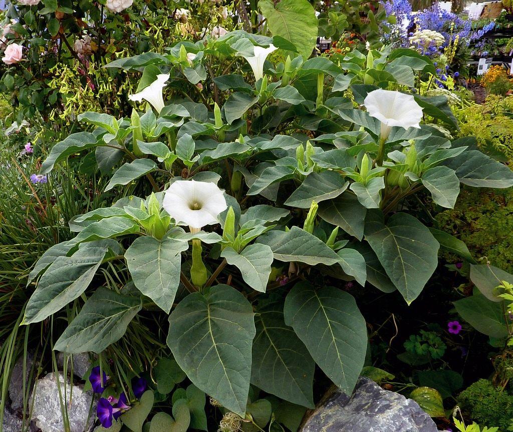 Самые редкие цветы в мире Интересные факты 44