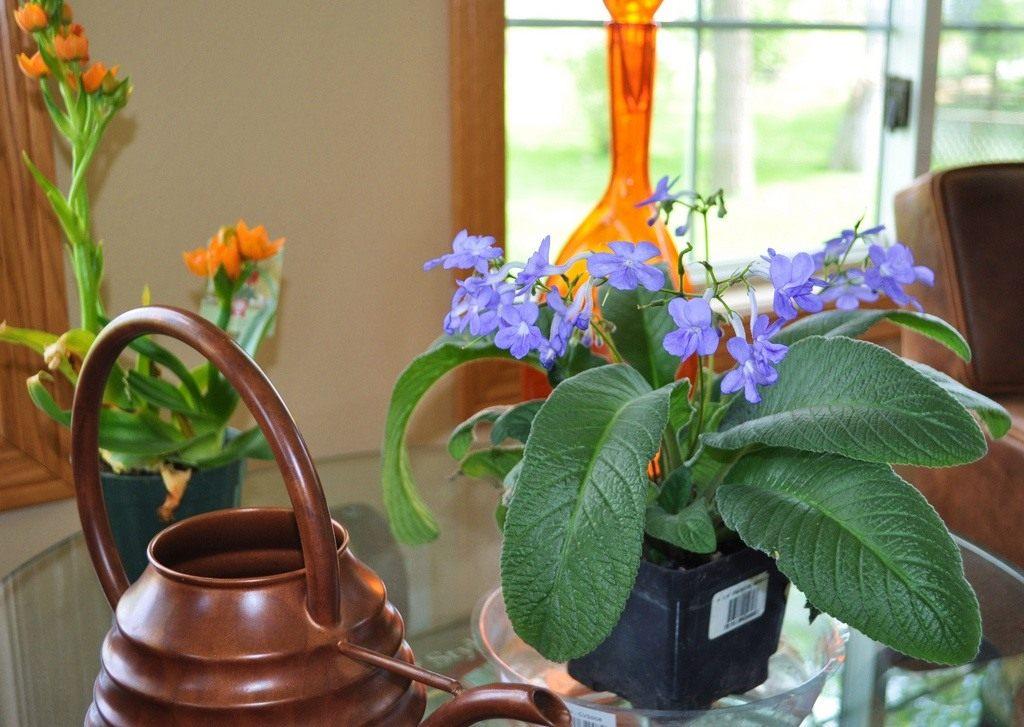 Фото комнатные растения без цветов