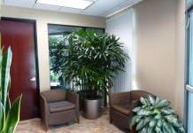 Декоративные комнатные растения в холле и на лестничных площадках