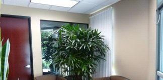Комнатные растения в холле