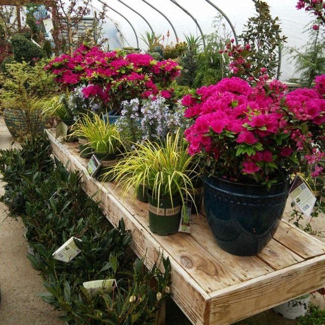 При покупке комнатных растений внимательно осмотрите их на признаки болезней и вредителей