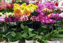 Покупаем комнатные растения правильно
