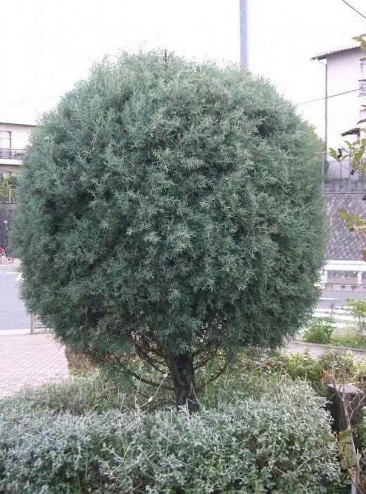 Деревья - m