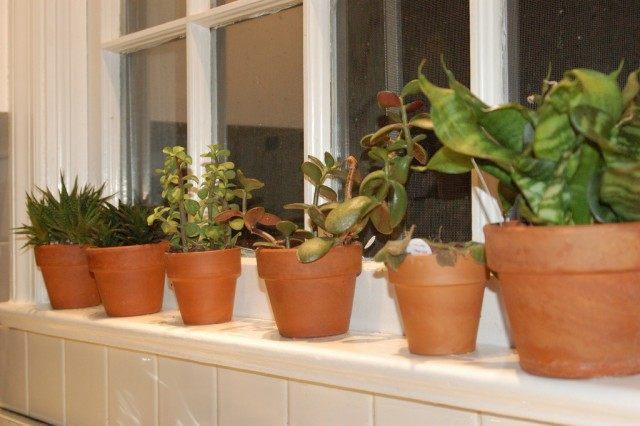 Комнатные растения на окне