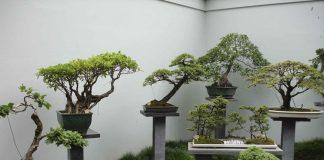 Выставка бонсай