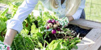 7 простых овощей для начинающих
