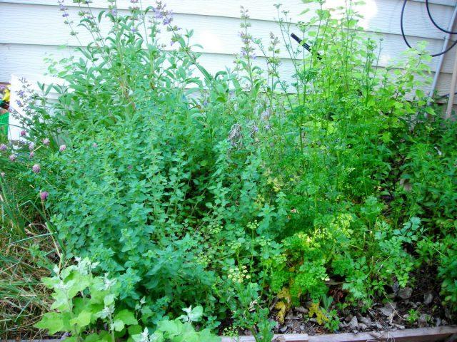 Ароматические травы, как правило, требуют только полива и хорошего освещения