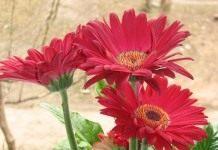 Проблемы выращивания комнатных растений. Часть 1.