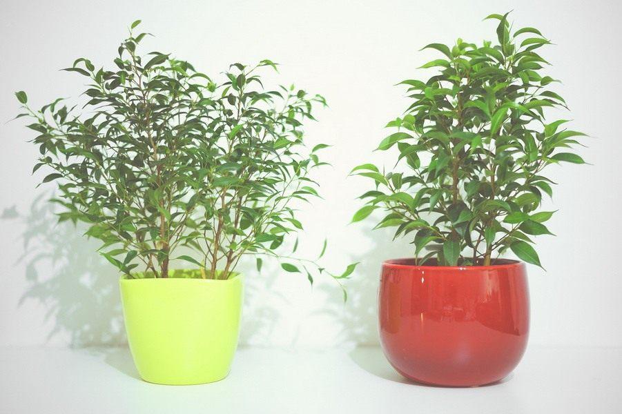 Для выращивания комнатных цветов анна купила 30 цветочных горшков