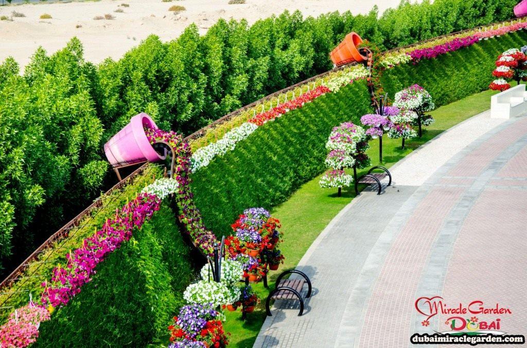 Чудо Сад в Дубай (Dubai Miracle Garden)
