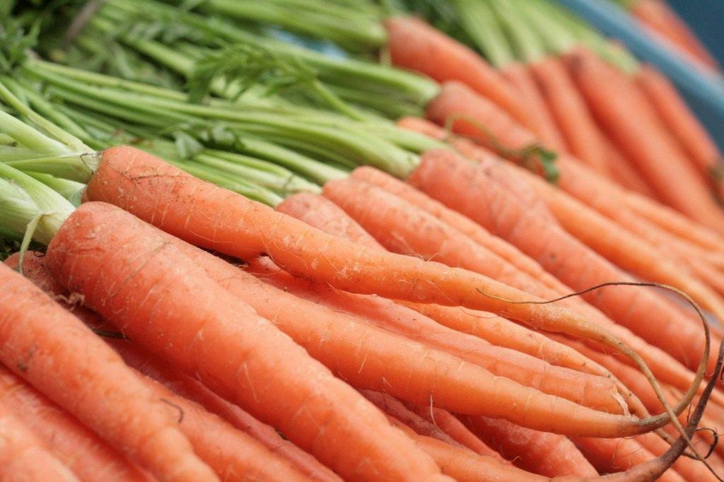 Грамотная посадка моркови весной и осенью на зиму