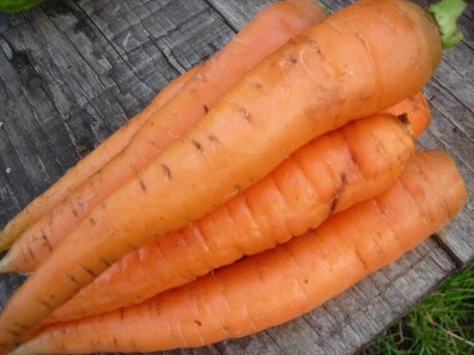 Семена раннего моркови