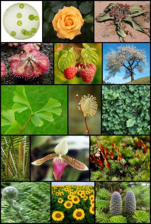 Изображение, иллюстрирующее разнообразие растений