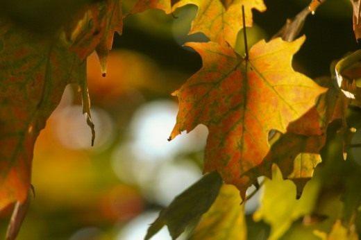 Листья меняют цвет