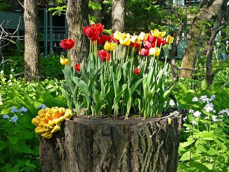 decorated-tree-stump-007