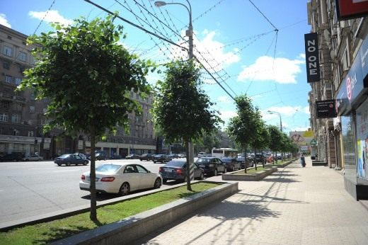 Москва, Озеленение Кутузовского проспекта