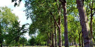 Зелёные насаждения как экологический фактор