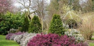 Вереск в украшении сада