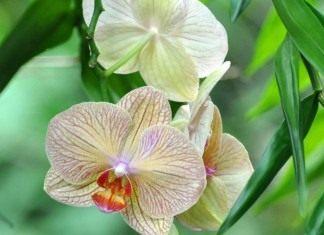 Орхидея самая приспособленная группа растений на земле