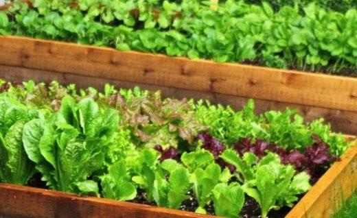 «зелёные» витамины