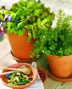 В зелени витамины: С, Е, В, бета-каротин