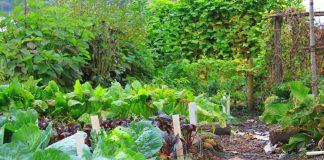 Совместимость растений, или друзья и враги в мире растений