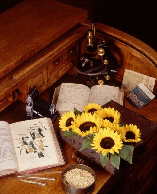 Инструменты ботаника