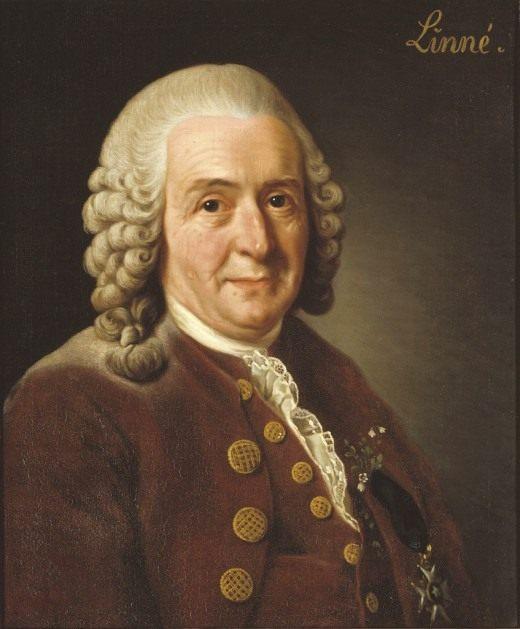 Портрет Карла Линнея работы Александра Рослина (1775)