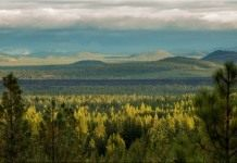 Вид с горы на хвойный лес