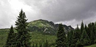 Хвойный лес в предгорье Ретезат в Румынии