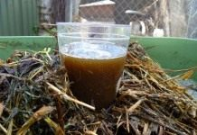 Компостный «чай» – лучшее натуральное удобрение