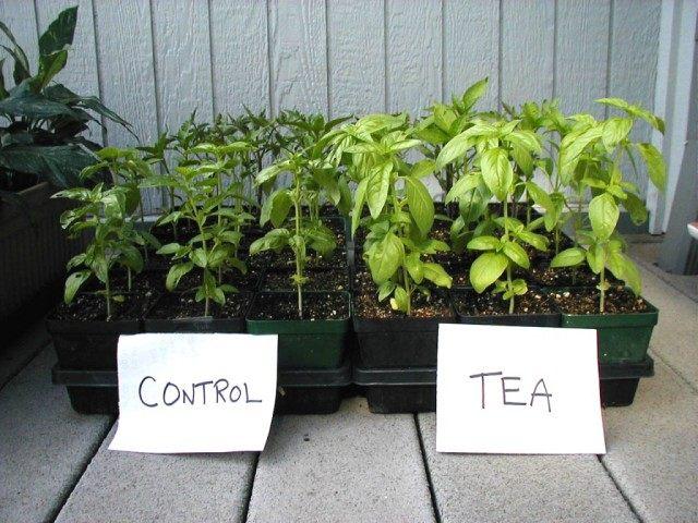 Сравнение результатов применения Компостного «чая»