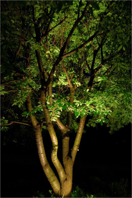 Дерево подсвеченное спотами на солнечных элементах