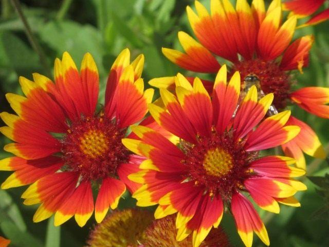 Фото увядшие цветы 119