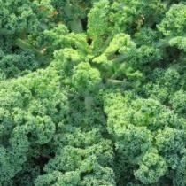 Декоративная капуста Кале