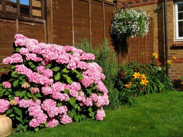 Вид на цветник летом