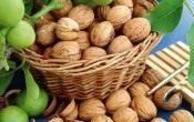 Грецкий орех — вечная польза!