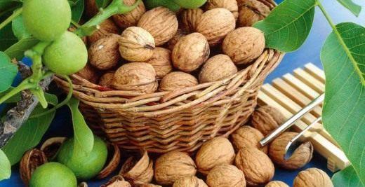 Чем старше дерево Грецкого ореха, тем выше его урожайность