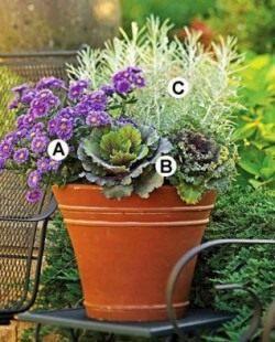 Схема 3: А. Астра «Purple Viking»; B. Декоративная капуста «Kamome Red»; С. Гелихризум «Icicles».