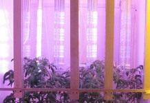 Светодиодные технологии для огорода на подоконнике