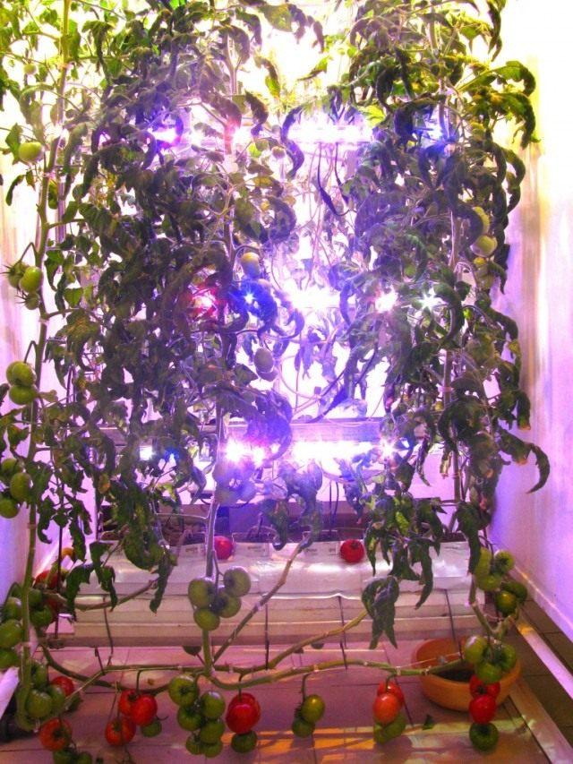 Освещение для выращивания зелени 386