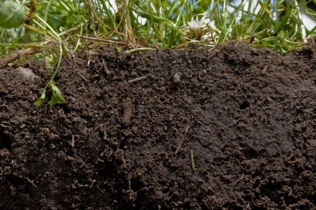 Богатая, гумусная почва